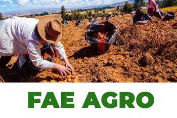 2 productores agrícolas recogiendo sus cosechas de papas
